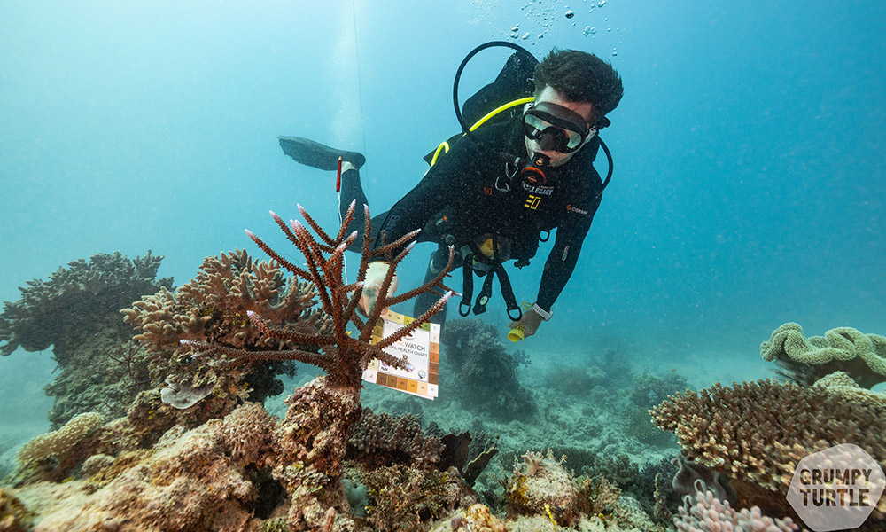 Dr Dean Miller doing Coral Watch monitoring. Credit: Grumpy Turtle